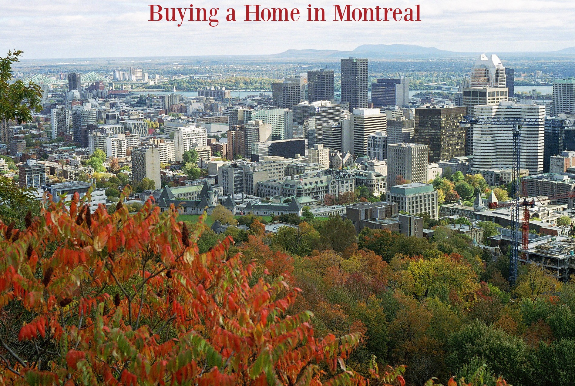 buying in montreal copy